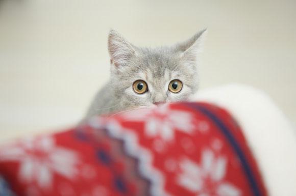 ペット見守りカメラのおすすめは?人気比較ランキング