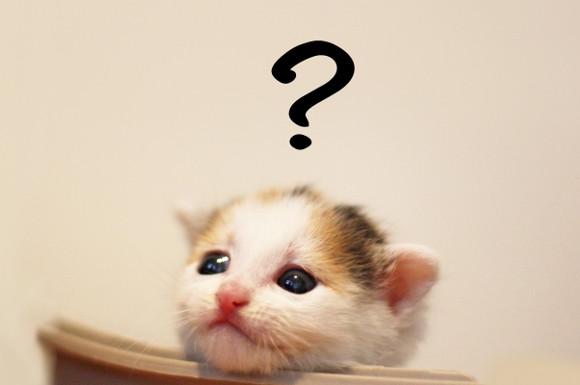 疑問符を浮かべる猫