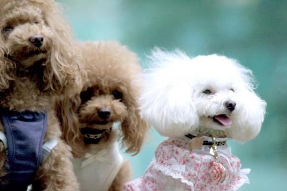 犬用グルーミングスプレーおすすめ比較ランキング!ケアに人気なのは?