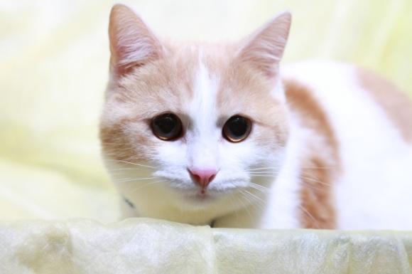 おすすめの猫用自動給餌器は?人気の商品比較ランキング