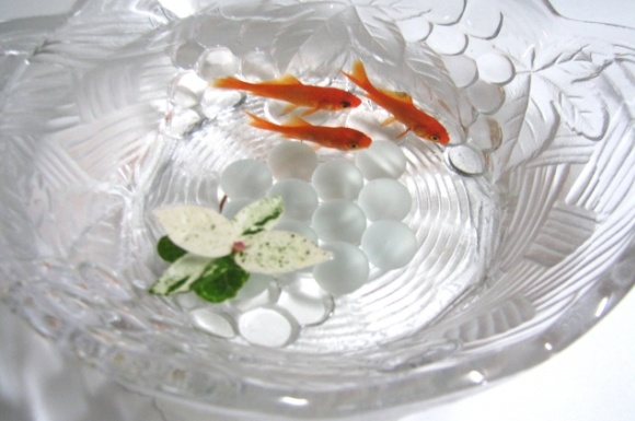 おすすめ金魚鉢の比較ランキング!ガラス製などの人気は?