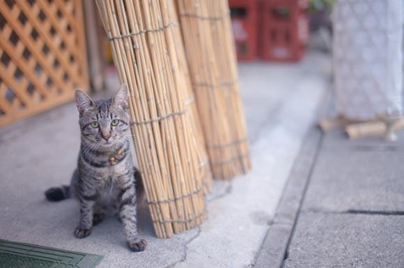 ネコとすだれ