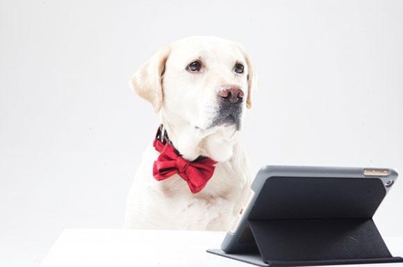 iPadを見る犬
