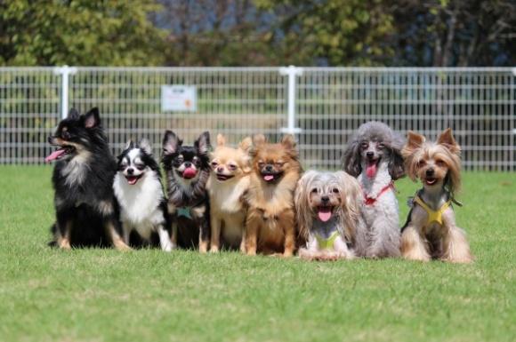 犬用早食い防止食器おすすめランキング!人気の商品比較