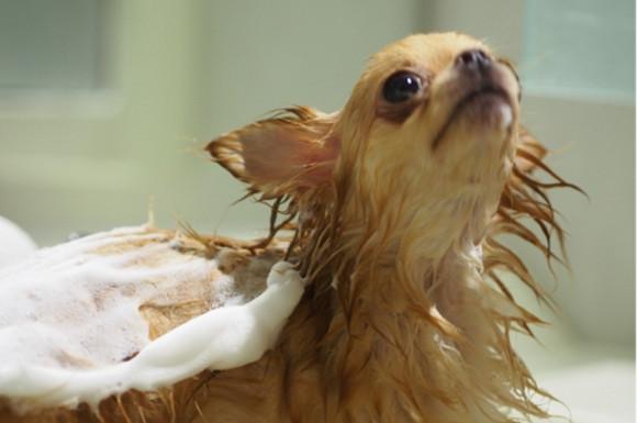おすすめ犬用無添加シャンプー比較ランキング!安心・低刺激で人気なのは?
