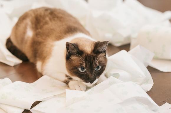 猫用ペットシーツおすすめ比較ランキング!人気でコスパが高いのは?