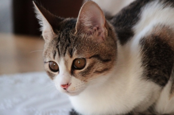 おすすめの猫用消臭剤ランキング!人気の商品比較