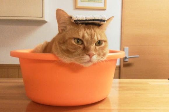 おすすめの猫用ドライシャンプーは?人気の商品比較ランキング