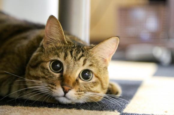 猫用ペットシーツ 1