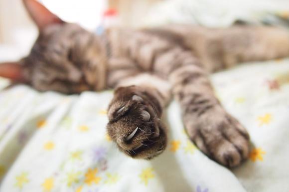 猫用爪切りおすすめ比較ランキング!人気なのは?