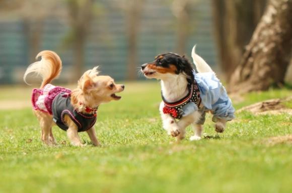 おすすめの犬用オムツ人気比較ランキング