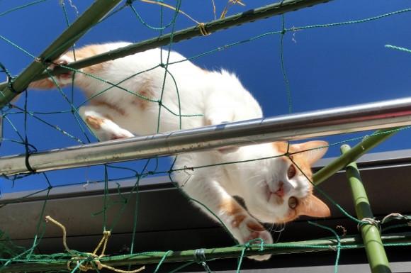 猫よけグッズおすすめ比較ランキング!超音波・マットなど対策に人気なのは?