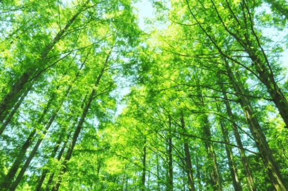 森林浴に人気な樹木系アロマオイルおすすめ比較ランキング!シダーウッドは?