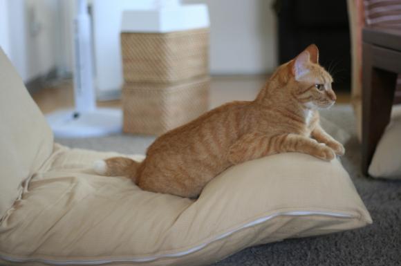 座椅子と猫